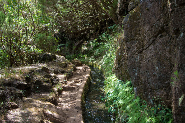 Landscape Levada Da Ribeira Grande Levada Walk Madeira Island Nature No People Outdoors Portugal Water Transport System Forest Ferns
