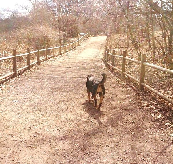 Autumn two years ago Fall Long Walks Dogs Of EyeEm Beauty