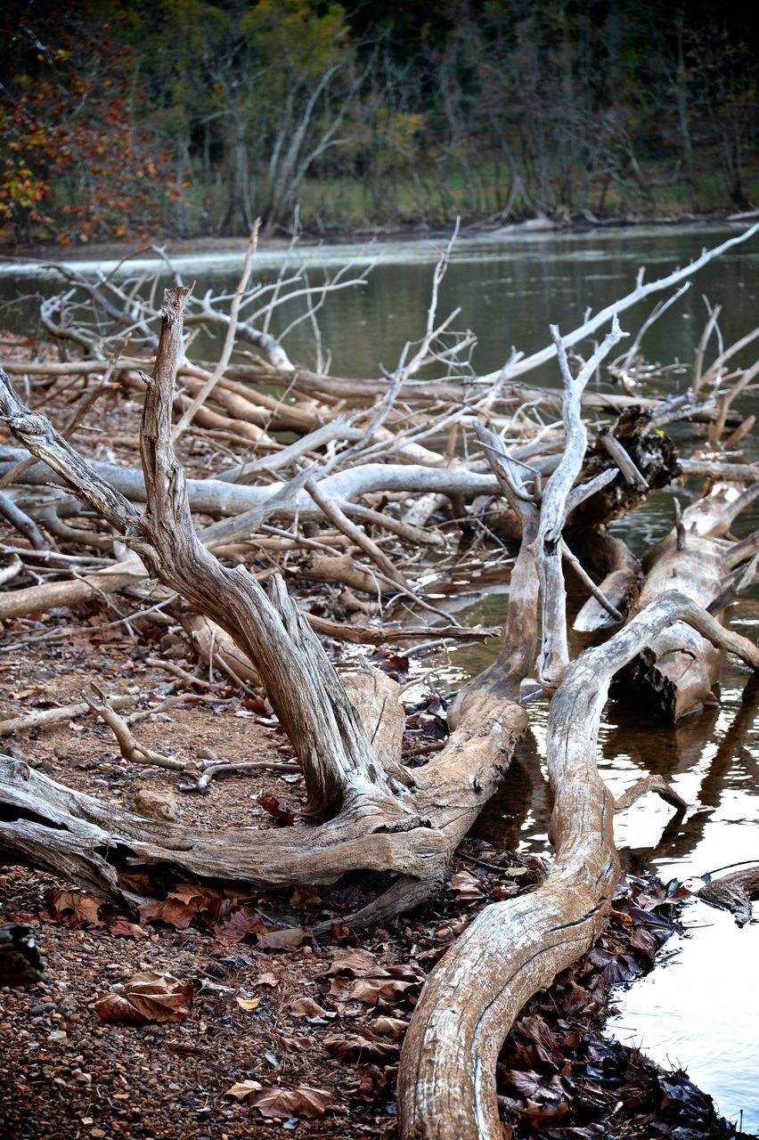 day, outdoors, tree, winter, nature, dead plant, no people, tree trunk, cold temperature, forest, tranquility, dead tree, dried plant, snow, close-up, branch, beauty in nature, water