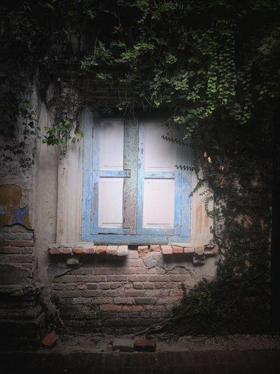 A window of a