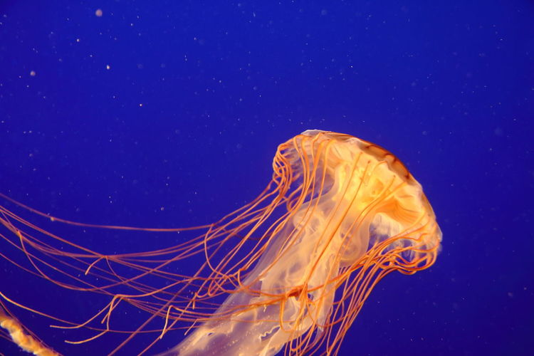 floating jellyfish in water Atlantic Ocean Diving EyeEm Best Shots EyeEm Selects Makro Nature Swimming Animal Animals Backgrounds Close-up Eye4photography  Fish Floating Jelly Jellyfish No People Ocean Saltwater Sea Tentacle Travel Destinations Underwater Water Wildlife