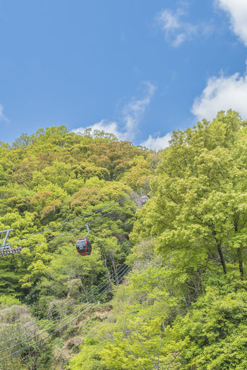 KOBE ropeway Tree Plant Sky Green Color Growth Nature Cloud - Sky Day Beauty In Nature Land Scenics - Nature Non-urban Scene Tranquil Scene Tranquility Environment Mountain Landscape No People Transportation Outdoors