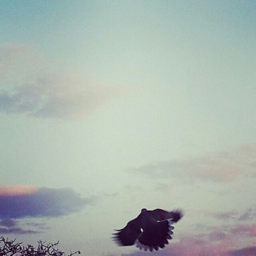Emprendiendo el vuelo Alas Cielo Y Nubes  Volar Ave Aves Vuelo Vuelo De Aves