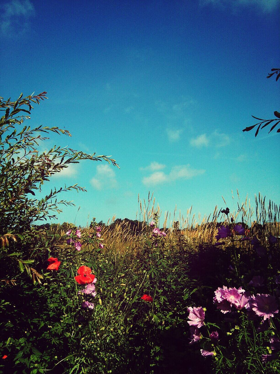 nature, growth, flower, sky, plant, no people, beauty in nature, outdoors, grass, red, day, flying