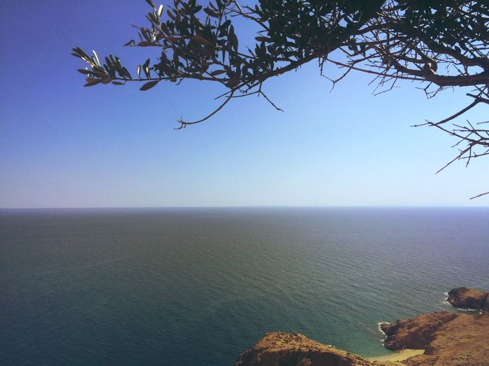 A Bird's Eye View Blue Clear Sky Color Palette Horizon Over Land Horizon Over Water Majestic Nature Remote Scenics Sea Seascape Tranquil Scene Tree Water