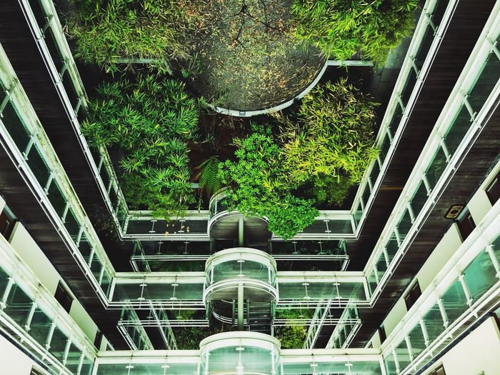 Built Structure Architecture Plant Tree No People Low Angle View Day Pattern Green Color Building Exterior Outdoors Ceiling Building Design Nature Growth Lighting Equipment Shape Geometric Shape