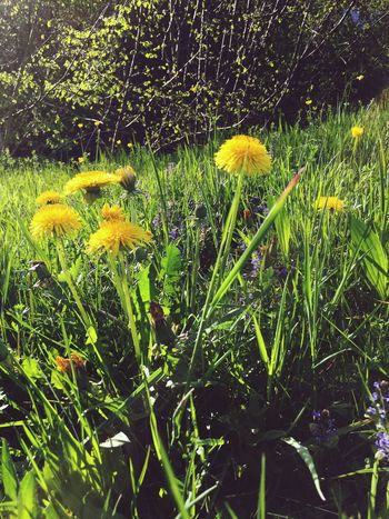 Nature Collection EyeEm Nature Lover Nature Flower Porn