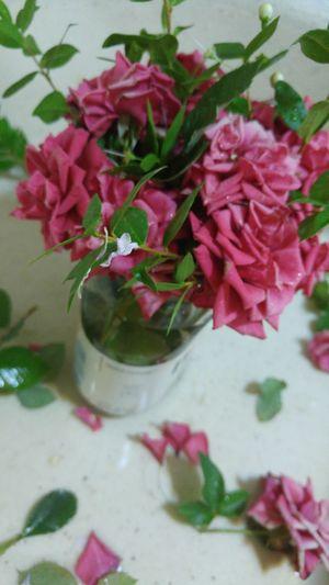 Flower Fragility Freshness Petal Pink Color Close-up Beauty In Nature Nature Flower Head Rose - Flower Decoration Blossom Springtime Flower Arrangement Pink Selective Focus Baghdad Baghdad , Lraq
