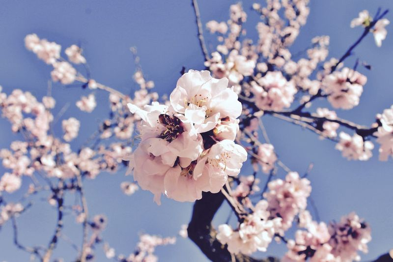 Pink Flower Nature Nature_collection Pastel Power Pastel Flowers Landscape_Collection Summer Vibes Spring Springtime Branch Branches And Sky Almond Tree Almond Blossom Blossom Blooming Blooming Flowers SPAIN Andalucía The Week On EyeEm Editor's Picks