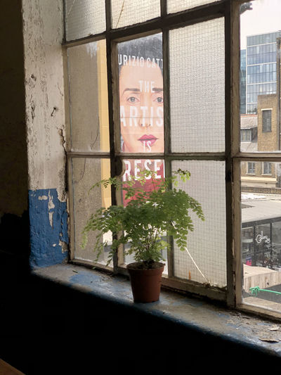 Potted plant on window sill against building