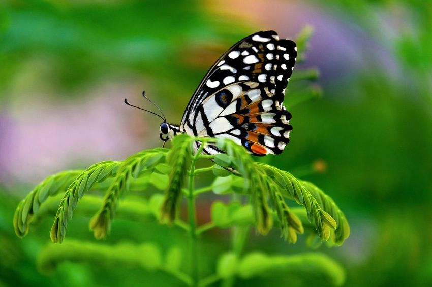 Butterfly on the branch Animal Wildlife Animal Themes Animal Animals In The Wild Insect Invertebrate One Animal No People Focus On Foreground Selective Focus Green Color Flower Beauty In Nature Close-up Nature Plant Part Plant Animal Wing Butterfly - Insect Leaf