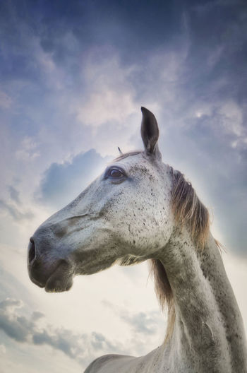 White Horse and Cloud Sky One Animal Horse Animal Head  Close-up Nature No People White Horse Animal Wildlife Cloud - Sky Animal Body Part Day Profile View Animal Neck Livestock Sky Animal Outdoors Domestic Animals Animal Themes A New Perspective On Life