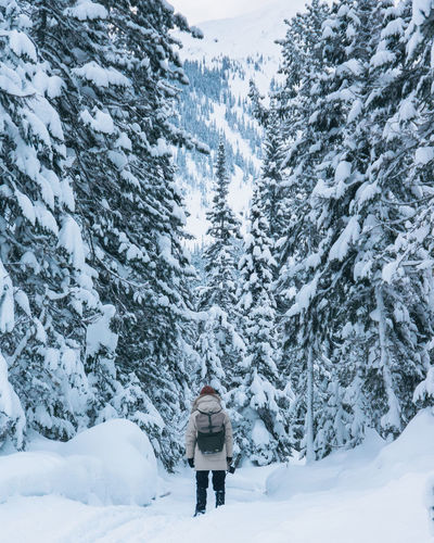 Rear view of person on snowcapped pine trees