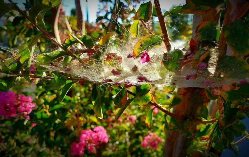 Nature Spider Web Growth No People Beauty In Nature Day Fragility Outdoors Close-up Plant Freshness Flower