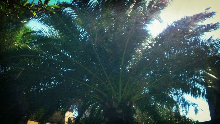 palmera Naturelovers Sun Palmera