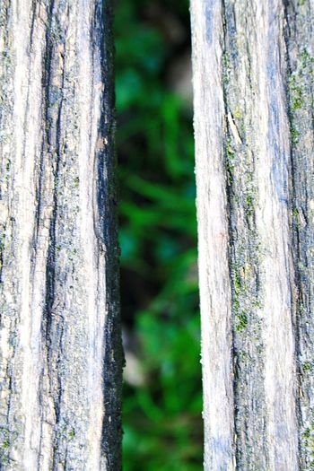 In The Forest Forestwalk Nature Green Grassland First Eyeem Photo
