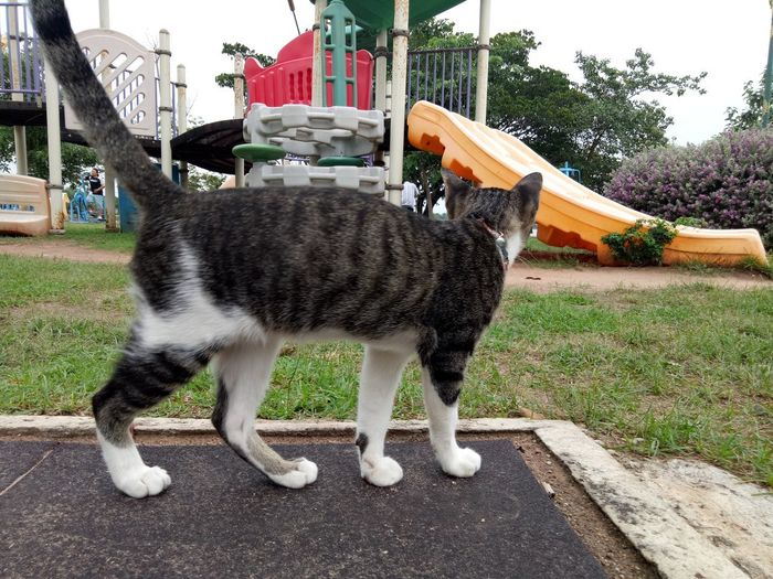 Cat standing in a lawn