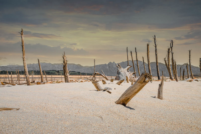 Panoramic view of wooden posts on field against sky during winter