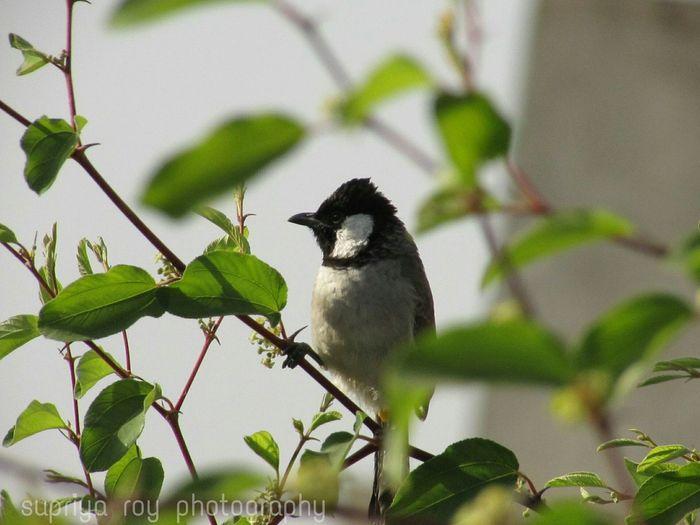Bird Photography Bird Watching Learning Photography Canonphotography Canonsx400is Pointandshoot Zoom Autofocus Canon Taking Pictures Click Click 📷📷📷 Followme Likeforlike Eyeempic Eyeemfollowers Jodhpur Rajasthan