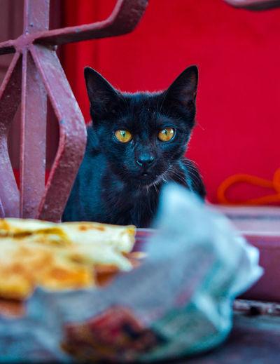 Cat Eyes Pets