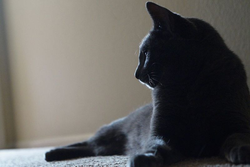 Close-up of black cat sitting on floor