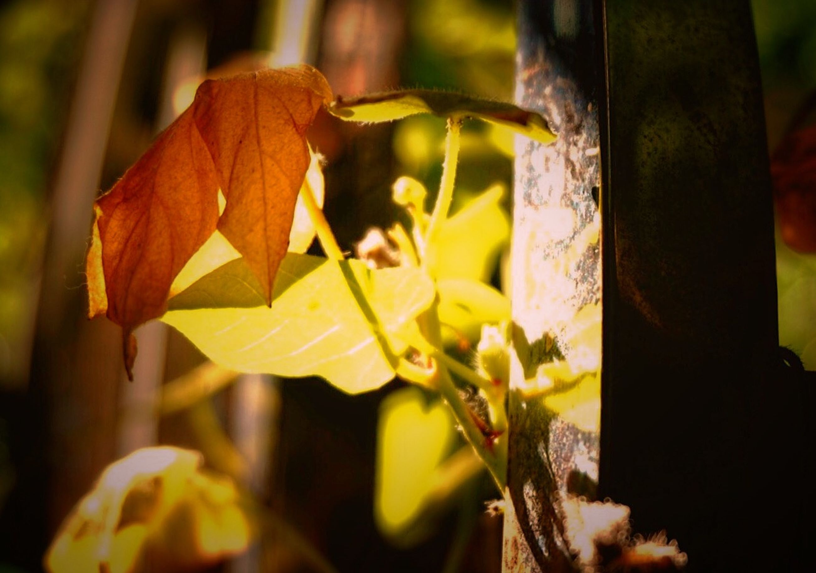 focus on foreground, close-up, leaf, selective focus, yellow, autumn, hanging, day, outdoors, nature, season, metal, change, no people, leaves, growth, wood - material, tree, sunlight, branch