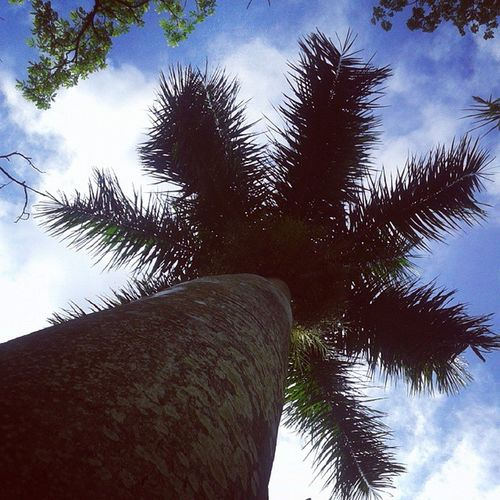 Plantmoreandmoretrees ...!