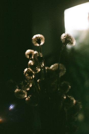 Filmphotography