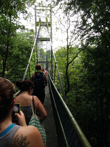 Adventure Amusement Park Bridge - Man Made Structure Bridges Childhood Day Enjoyment Fun Girls Hikers Leisure Activity Lifestyles Outdoors Photographing Playground Real People Sg Singapore Tattoo Togetherness Tree Treetopwalk Two People Vacations Walkways