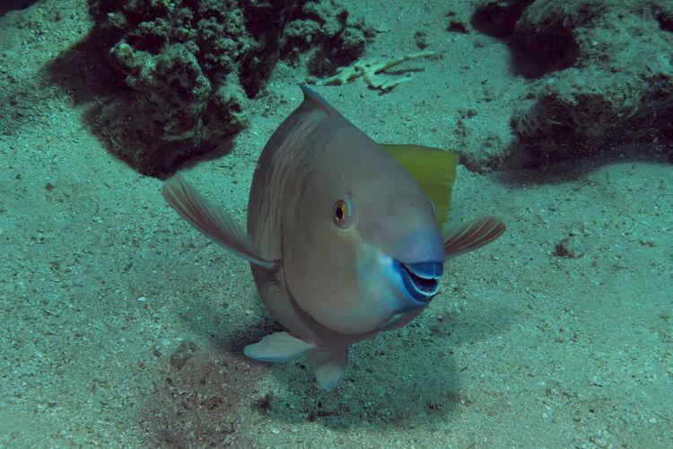 Sea Underwater
