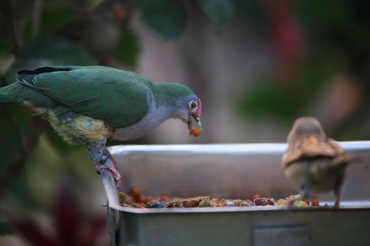 Close-Up Of Bird Perching Feeder