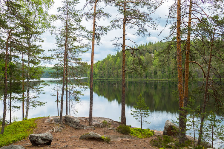 Scenic landscape with woodland and lake reflection at summer day in Finland. Tree Plant Water Tranquility Tranquil Scene Scenics - Nature Beauty In Nature Lake Growth Nature Forest Day Reflection Tree Trunk Outdoors No People Non-urban Scene Green Color Finland National Park Summer Daytime Cloudy Idyllic Freshness
