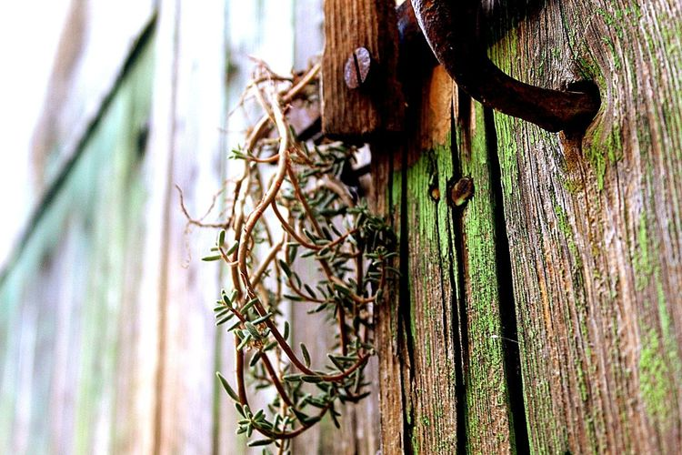 D_Eye Photography Photographer Canon EOS 1855mm Lyon France Picoftheday Instapic Instagood Wood Wooden Nature Old Desktop Texture Fence Rustic Leaf Closeup Flora Wall Color Abandoned