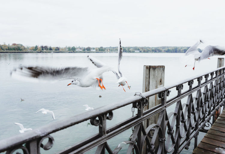 Seagulls flying over lake against sky during winter