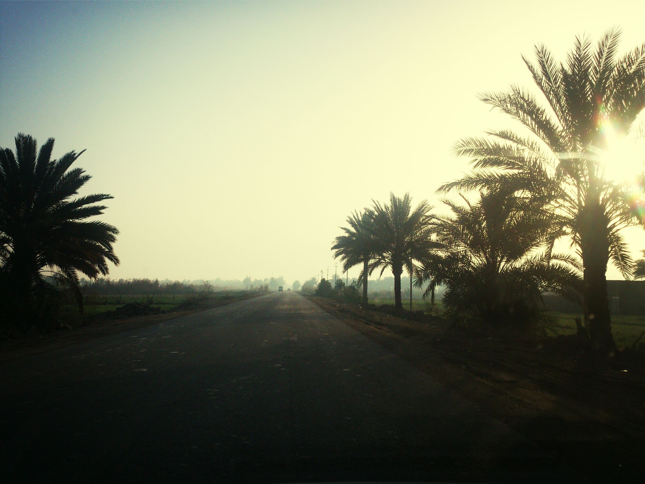 tree, the way forward, clear sky, road, transportation, sun, diminishing perspective, vanishing point, tranquility, silhouette, palm tree, tranquil scene, sunlight, sunset, nature, copy space, country road, growth, lens flare, landscape