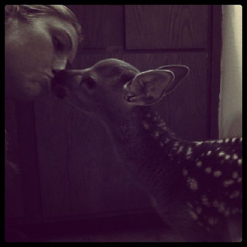 Sweet kisses Sikadeer Babydeer Bottleraise