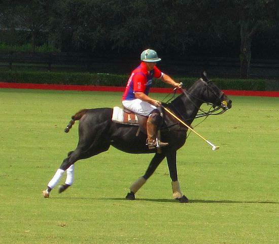 Action Black Horse Competition Field Full Length Grass Grassy Green Color Horse Horses Playful Polo Polo Horses  Polo Player Polo Stick Red Skill  Sport Sports