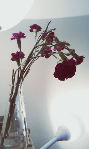 Flowers Light Composition Beauty