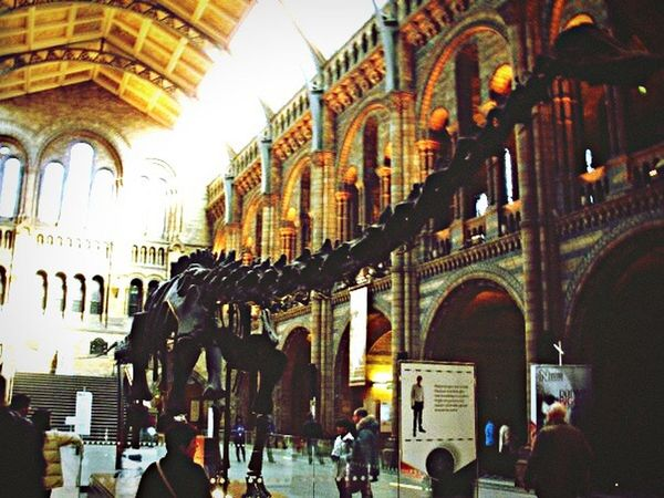 Great Britain United Kingdom LONDON❤ London London_only History Museum  Dinosaur Showcase May EyeEm Best Shots Eye Eye4photography  EyeEm Gallery My Passion ❤ My Town My Photography My Point Of View My New Life  My Best Eyeem Shot My Passion Taking Pictures Taking Photos Eye4photography  Unitedkingdom