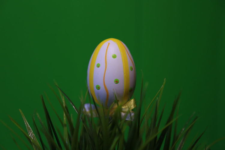 Isolated Easter Deco series The Purist (no Edit, No Filter) Raw Raw Photography Noedit Raw Image Nofilter Stock Photography Colored Background Green Background Stock Image Easter Decoration Springhassprung Grass Chick Easter Egg Wielkanoc Easter Springtime Green Color Grass Easter Egg Egg Easter Green Color Plant