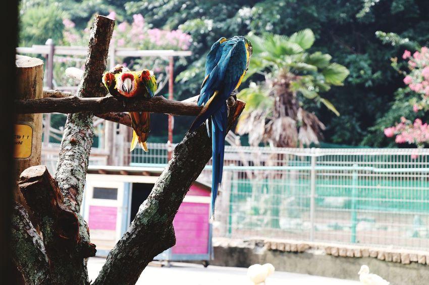 Animal Bird Bird Photography Birds_collection Birds Of EyeEm  Zoo Zoophotography Zoo Animals  EyeEm Selects Tree EyeEmNewHere