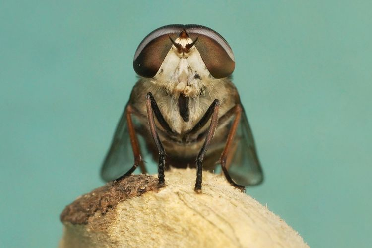 Insect faces are horsefly taken at close range