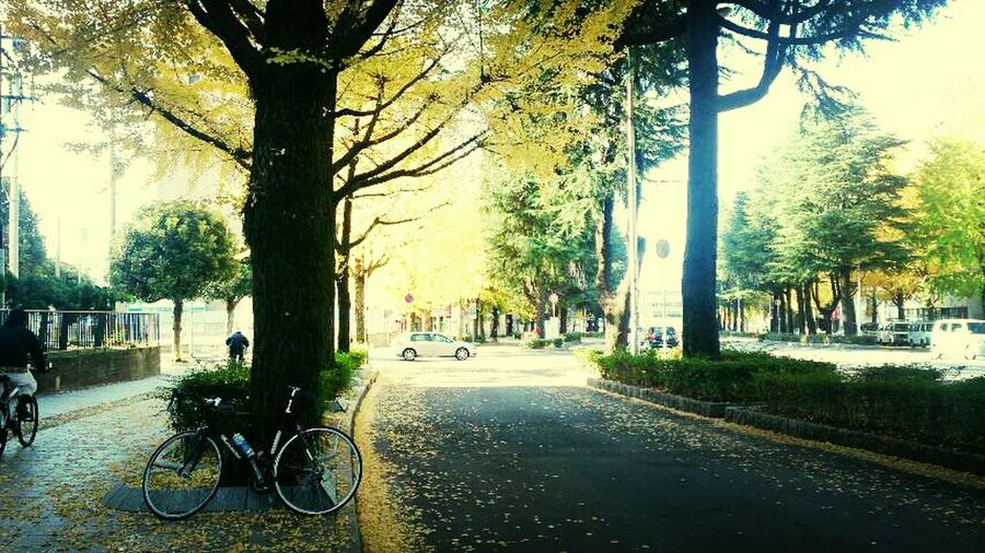 Japan Cycling Autumn