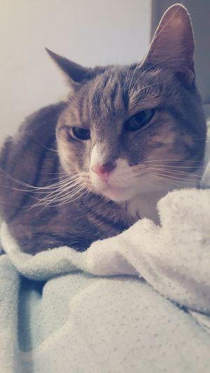 Cat Catlife