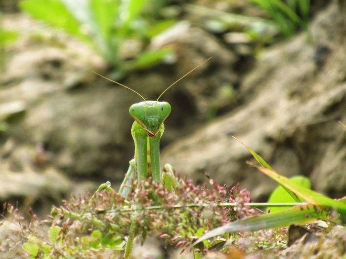 mantis pose -2