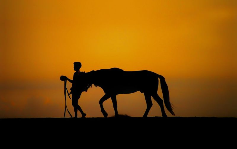 Silhouette horse on field during sunset