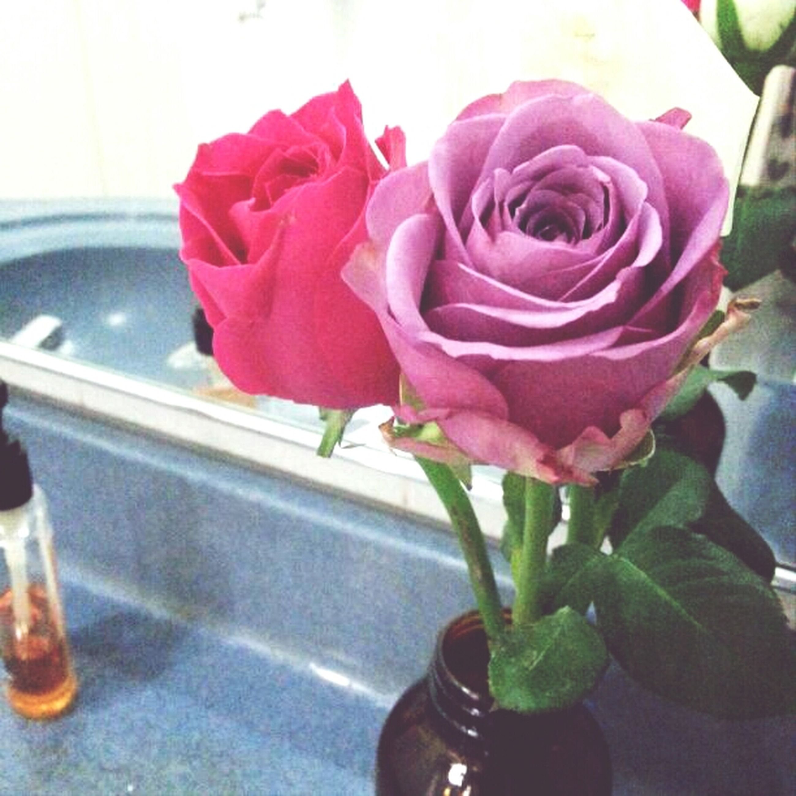 flower, petal, rose - flower, flower head, fragility, freshness, indoors, vase, pink color, close-up, rose, beauty in nature, single flower, plant, nature, growth, blooming, potted plant, focus on foreground, bouquet