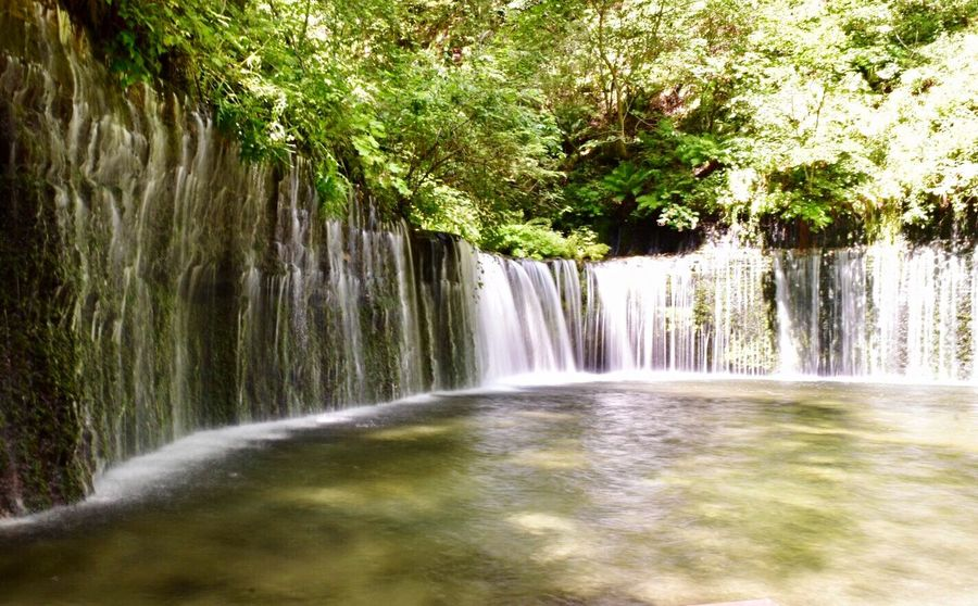 Shiraito Falls【白糸の滝・軽井沢】 Karuizawa,Japan River Nature Japanese Superb View Japan Shiraito Falls Tree Waterfall Water Beauty In Nature Scenics - Nature Motion Plant Nature Flowing