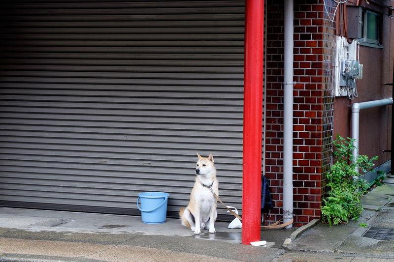 Animal Cute Dog Dog❤ Fujifilm Fujifilm X-E2 Fujifilm_xseries Japan Kamakura Lovely わんこ 犬 狗 鎌倉