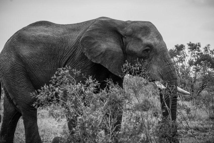 Nature Power Animal Elephant Landscape Majestic Powerful